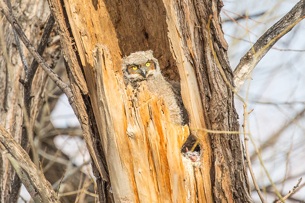 Twin Lakes Owls (1)