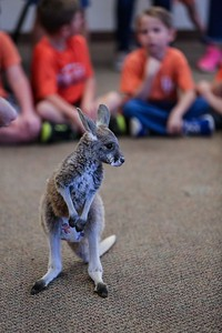 kangaroo-helps-the-brook-hill-school-kindergartners-learn-about-the-letter-k