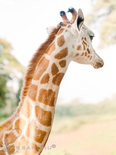 Safari-Africans-082.jpg