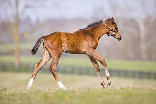 Catholic Boy Foals - April '21