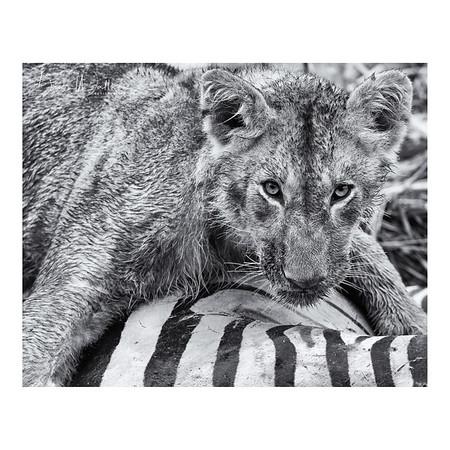 Maasai Mara Monochrome Wildlife Prints (Gallery will open in 2021)