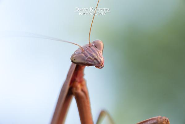 The Posing Praying Mantis