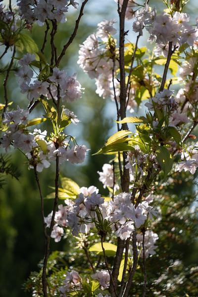 Nana's garden 24 Apr 2020-33.jpg