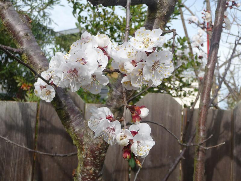 spring flowers-1000745.jpg