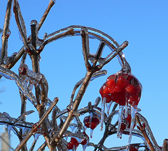 Ice Storm of Aught Seven