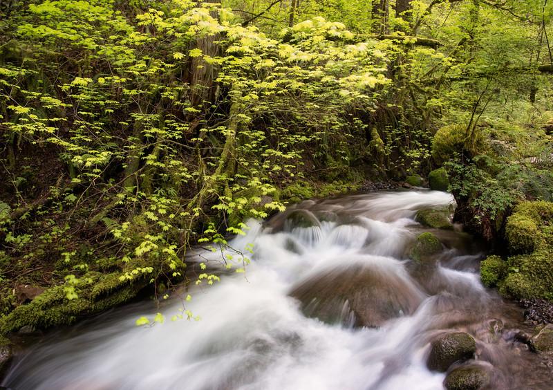 Columbia Gorge Spring