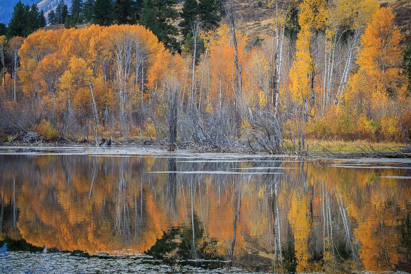 October 17 - Beaver Pond.jpg