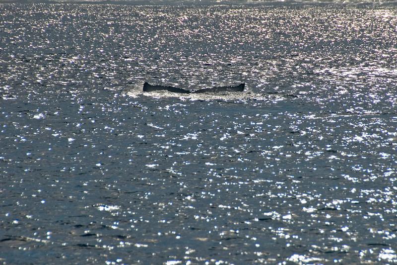 Whale Tail - Exmouth, Western Australia