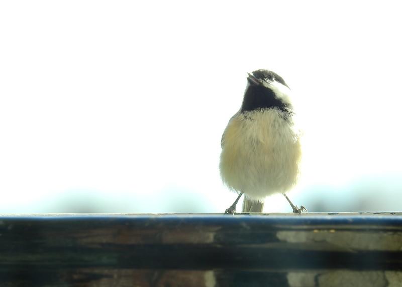 birds (120).JPG