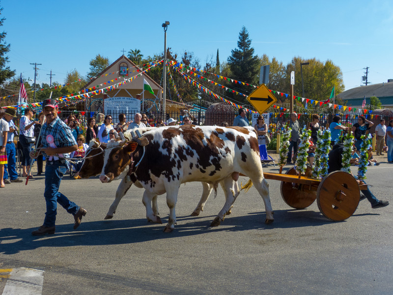 """Animal carts in the annual Portuguese """"Our Lady of Fatima"""" Celebration parade in Thorton, CA."""