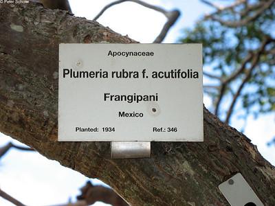 Plumeria, Frangipani signs