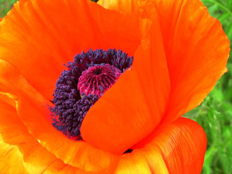 poppy 76  www.tabblo.com/studio/stories/view/248665/