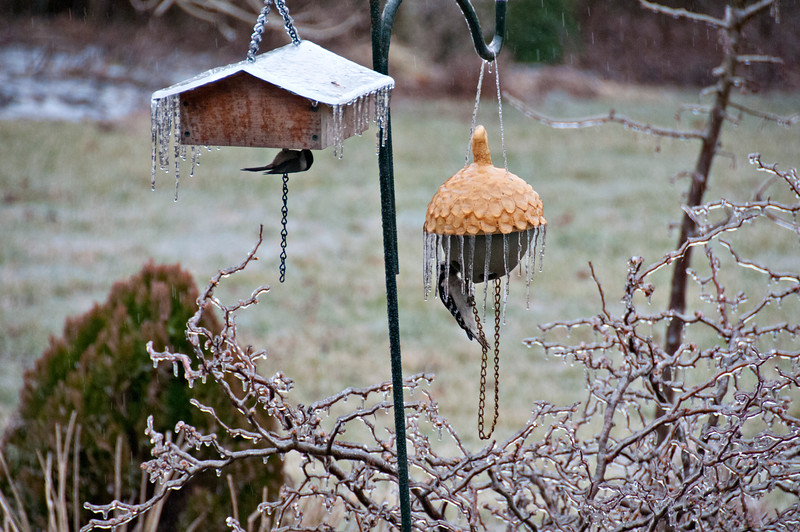 Two suet feeder...left one made by Stephen, right one made by me.  Both appeal to clinging birds only.
