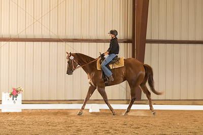 Horse 613
