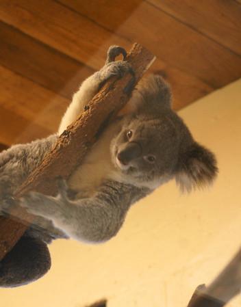 pb zoo 11 3 2012