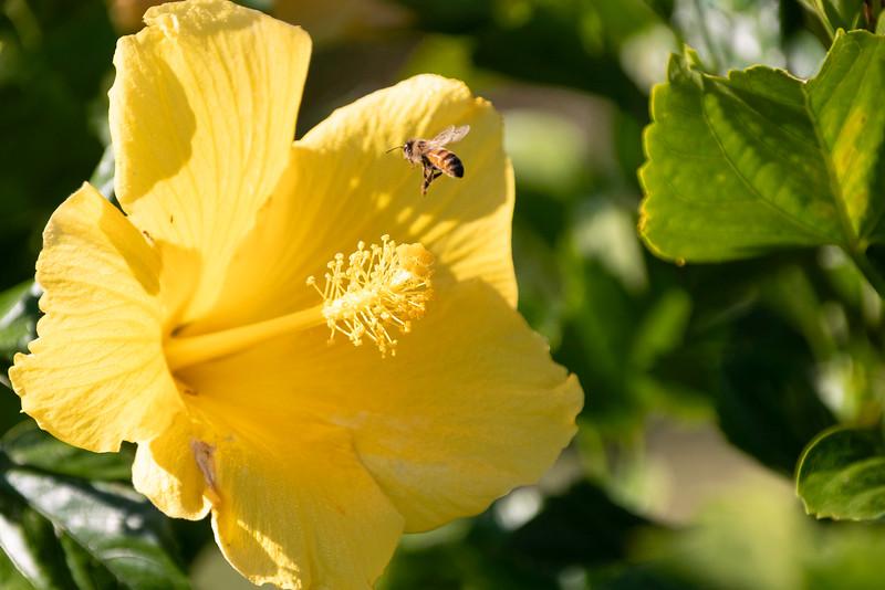 1_21_21 Bee going for pollen.jpg