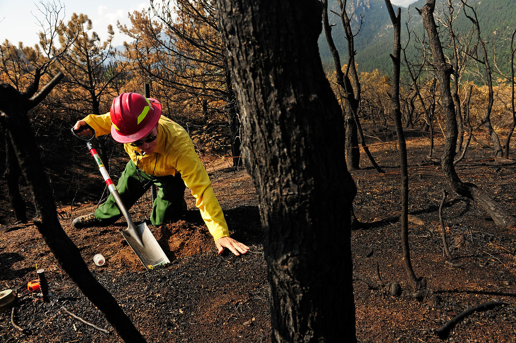 . Brad Rust, a Soil Scientist for the Waldo Canyon BAER team, shovels dirt in a burned area to collect soil samples on July 10th, 2012. Burned Area Emergency Response or BAER teams have been dispatched onto the Waldo Canyon fire burn area. BAER teams, which are made up of soil scientists, hydrologists, engineers, archaeologists, biologists, and others, are used to assess the extent of the damage left from a fire, determine the soil burn severity, and help communities and residents make plans for dealing with flash floods in fire zones.  The communities surrounding the Waldo Canyon fire live in an environment where the canyons within the burned area can produce flash floods. Helen H. Richardson, The Denver Post