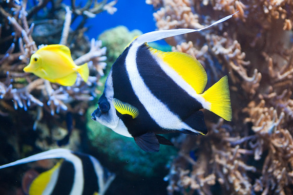 2009 Monterey Aquarium