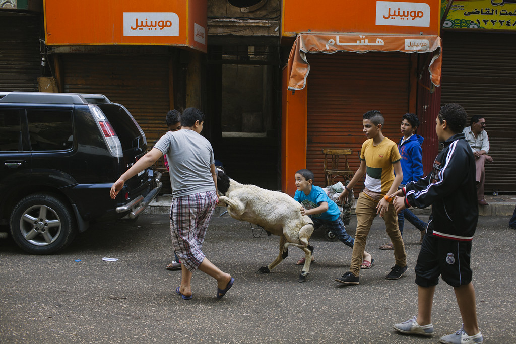 . A group of Egyptian boys push a sheep toward a butchery during the festival of Eid al Adha, or the Feast of the Sacrifice, in a street in the old city of Cairo on October 15, 2013 in Cairo, Egypt.  (Photo by Ed Giles/Getty Images).