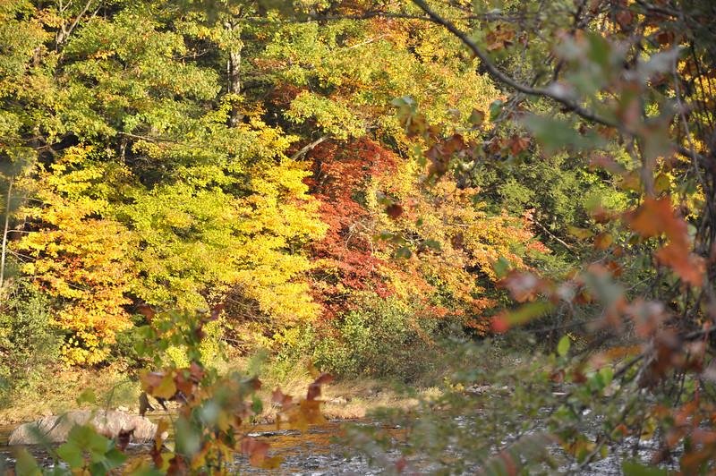 Foliage 024.jpg