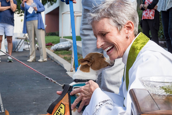 St. Francis Festival Blessing of the Pets