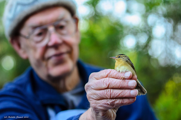 Fort Morgan Bird Banding
