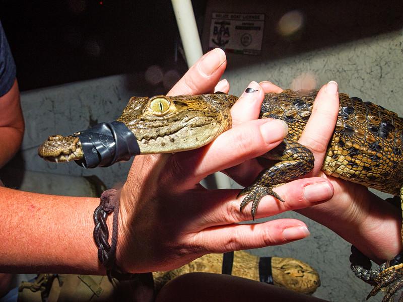 American Crocodile Education Sanctuary--26.jpg