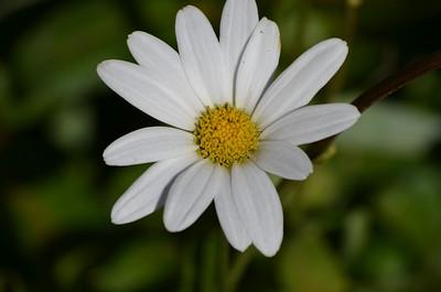 FLOWERS FLOWERS