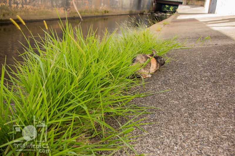 August 23, 2016 Bunnies on the Canal (38).jpg