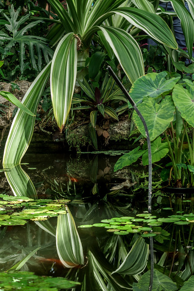 Leafy Reflections from Lincoln Park Conservatory