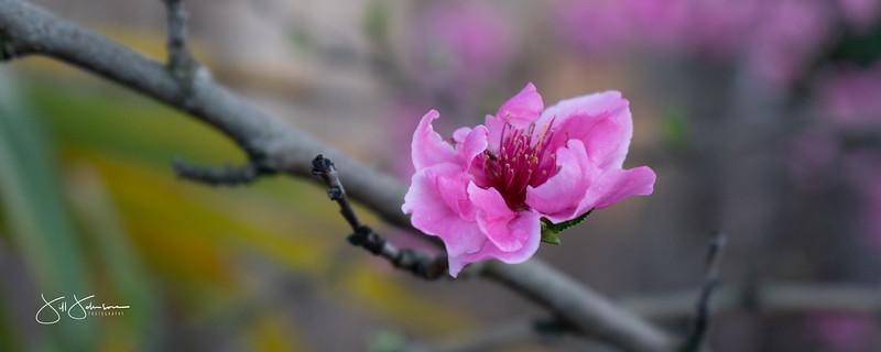 Sacramento Flowers Spring 2020