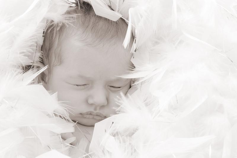 Newborns and Babies Portfolio