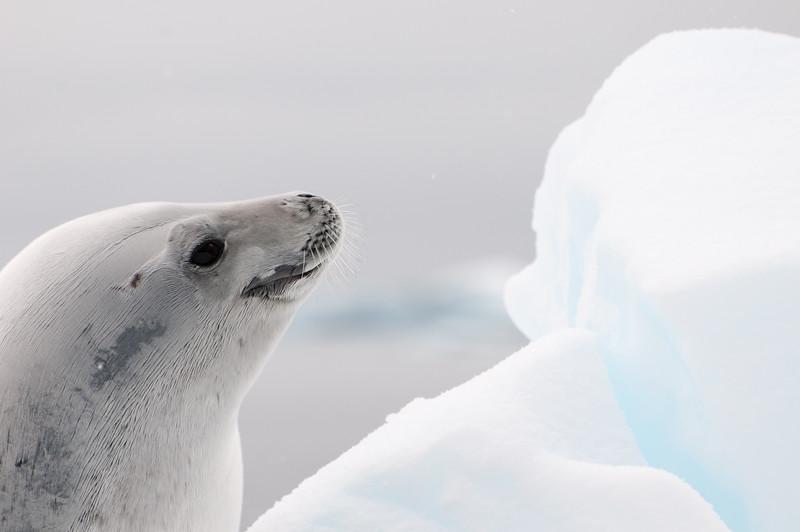 Antarctica 2015 (23 of 99).jpg