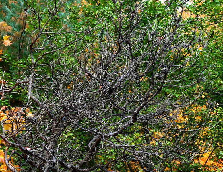 Tangle Tree