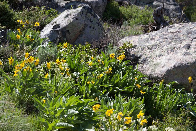 2011_07_03 Wyoming 260.jpg