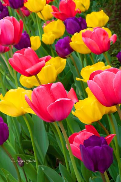 April 15_Tulip Garden_0902.jpg