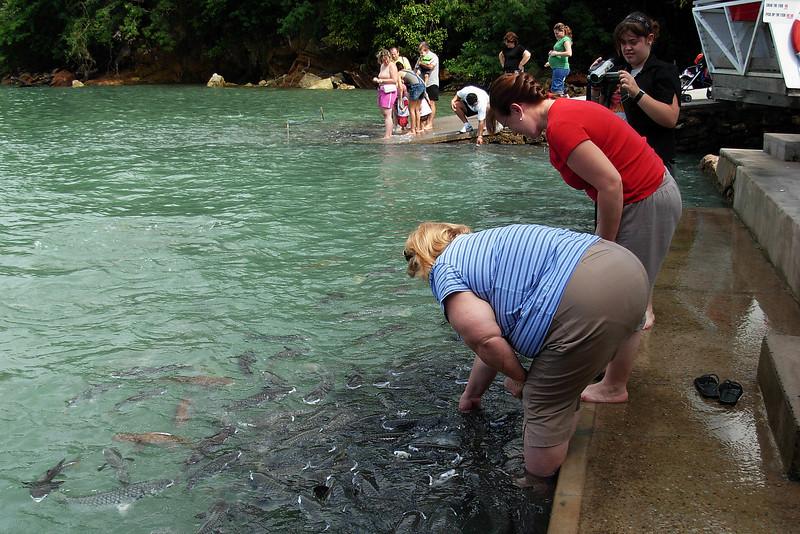 Fish Feeding 2.jpg