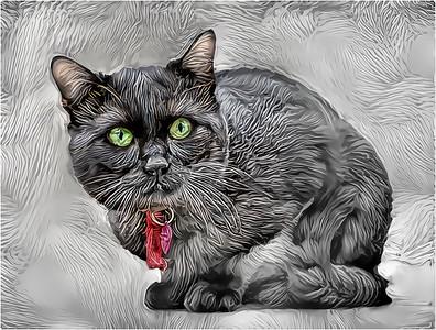 Feline - Cats
