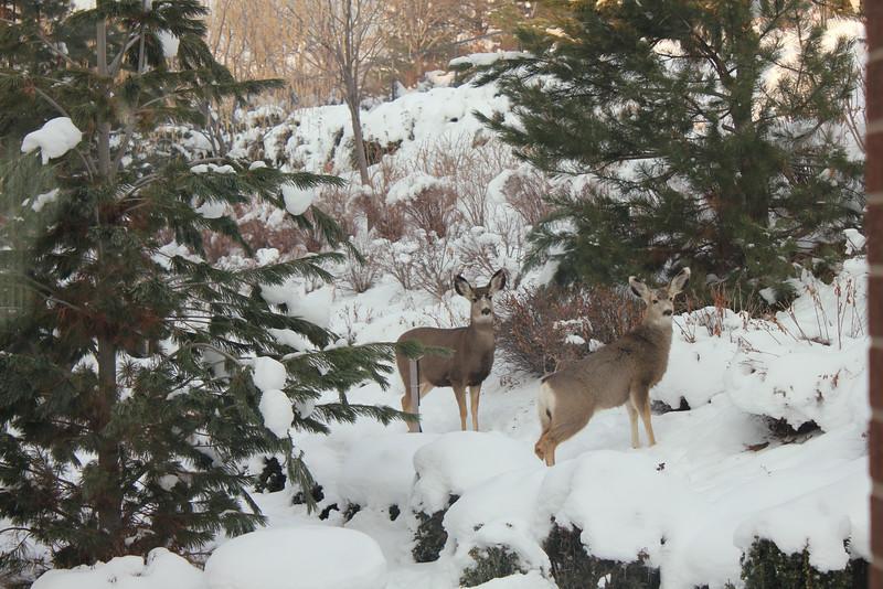 Deer_outside_May_01_06_2013_4547.JPG