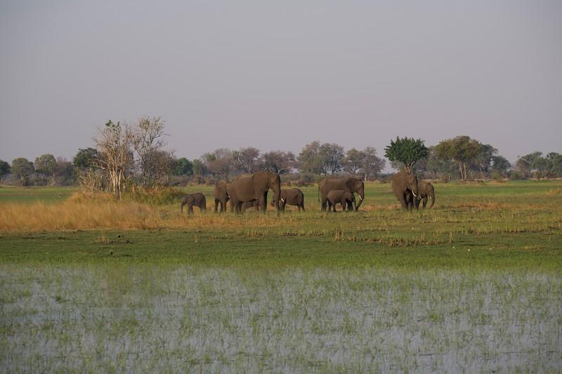 Elephants, Shinde camp, Botswana