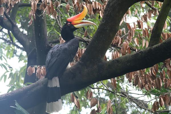 Kuala Lumpur Birdpark