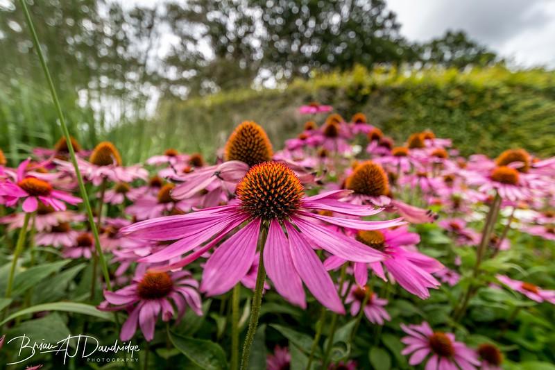 500_Sussex Prairie Gardens-3755.jpg