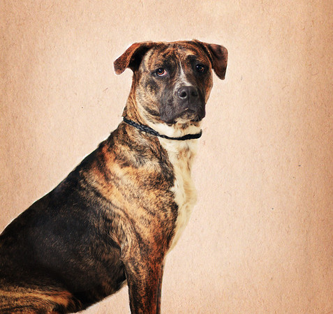 D.C. Animal Shelter 01-09-13
