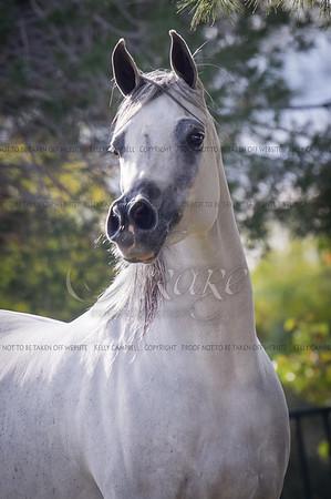 Arabian Expression
