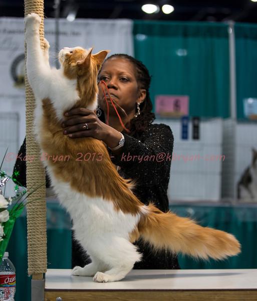 CatShow2014055_1.jpg