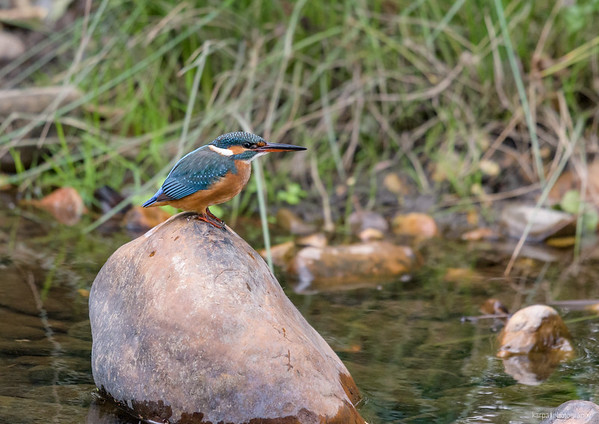 Extremadura – Kingfisher
