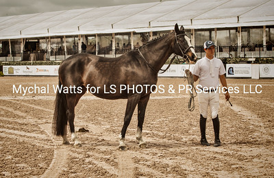 AES GRAND PRIX OF FLORIDA & STALLION GRADING at Global Dressage
