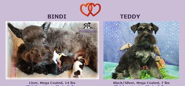Bindi & Teddy Puppies, DOB 2/11/2020