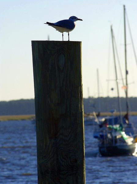 East Coast Birds