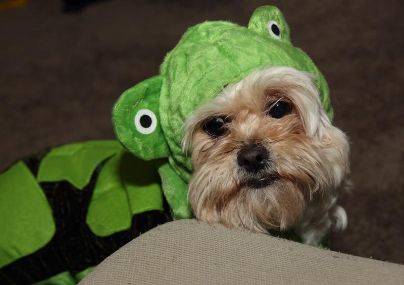 Maisie as a turtle.JPG